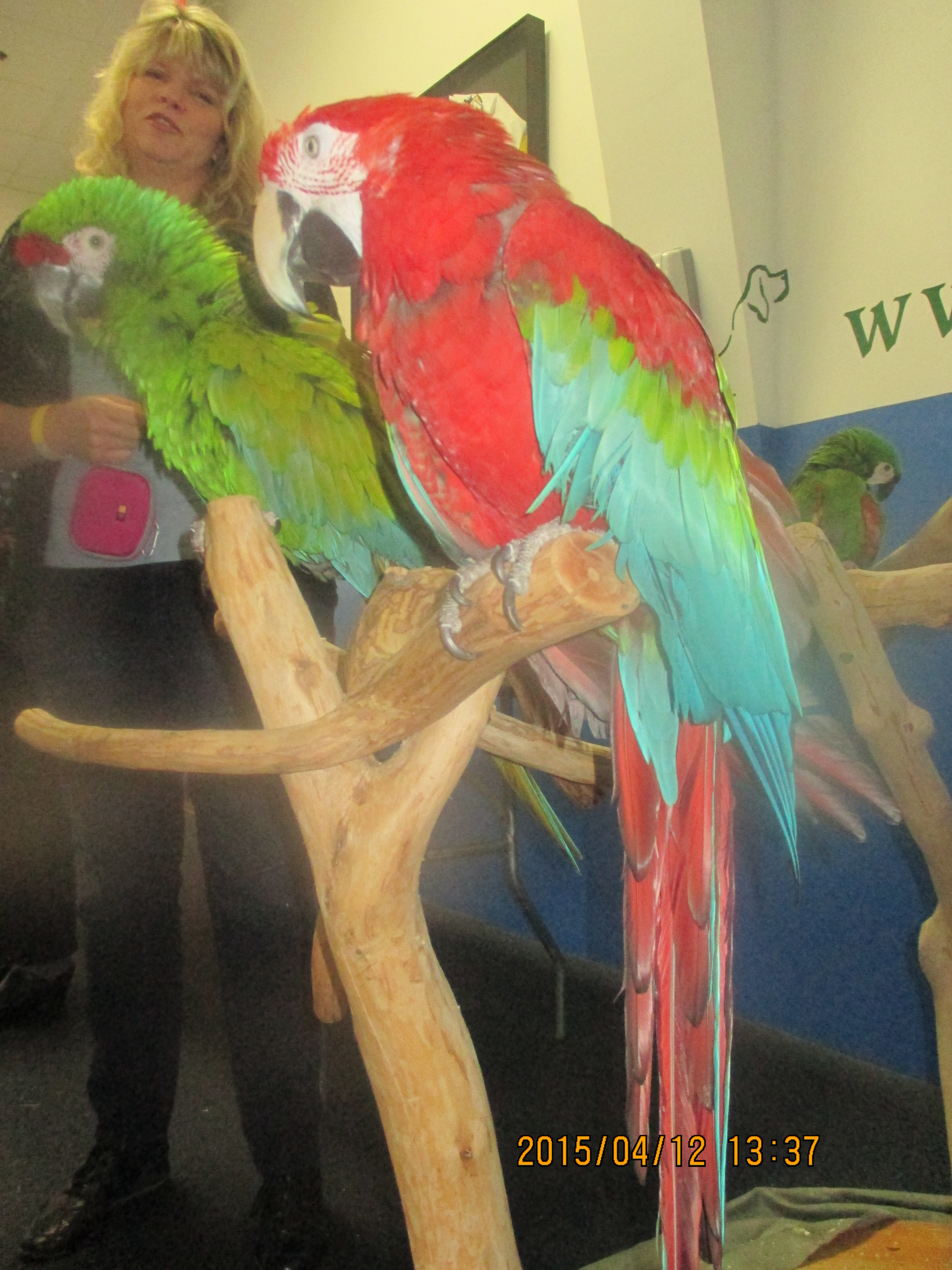 Parrot dating site