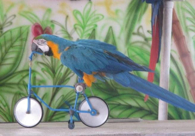 bike macaw